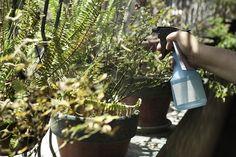 A leghatékonyabb házi permetszerek a kertünk szépségéért
