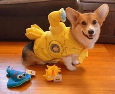 The SS Chompers (Yellow Submarine) | 15 Precious Corgi Dogs In Halloween Costumes