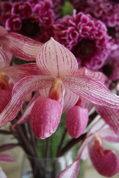 #Orchids   #Flowers   #flower