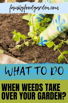 Do you know what to do when weeds take over your garden? Dealing with weeds is an inevitable part of gardening. Trying to figure out how to clear weeds is actually learned spontaneously as you grow your garden. Over time you'll learn the best ways to prevent or get rid of weeds in your location. Check this pin for more details! #removingweeds #gardening #weeding