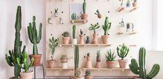 Decorar el hogar con cactus - http://www.decoora.com/decorar-el-hogar-con-cactus/