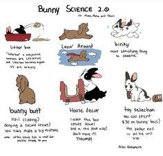 Bunny science