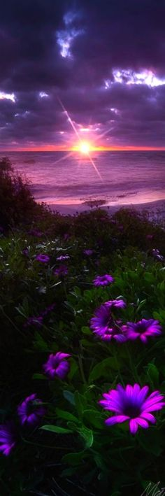 Landscape - Flowers bloom along the California coast in La Jolla. - Sun Diamond - Photography by Matt Aden