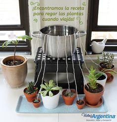 Si sos fan de las plantas y también de los viajes, siempre te acompaña la preocupación sobre cómo estarán las plantas sin agua.