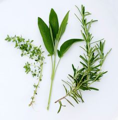 Just as herbs are easy to grow and use in recipes, they're easy to propagate too. Garden Therapy saves you the money and trip to the garden center for more herbs by providing a how-to for propagating them.