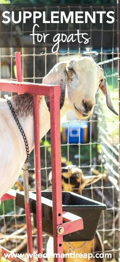 Supplements For Goats    Weed 'Em and Reap: