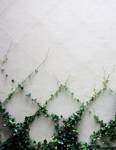 Vines are plants that exhibit a climbing ot trailing habit. Vines look nice for the garden and are easy to maintain. Learn about the various types of vines. Dream Garden, Garden Projects, Garden Ideas, Backyard Ideas, Patio Ideas, Courtyard Ideas, Fence Ideas, Garden Inspiration, Design Inspiration