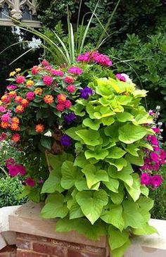 Beautiful Container Garden with spikes pink geranium lantana violet and magenta petunias and cascading sweet potato vine. The post Beautiful Container Garden with spikes pink geranium lantana violet and magen appeared first on Decoration. Outdoor Flowers, Outdoor Plants, Outdoor Decor, Potted Plants Patio, Outdoor Ideas, Backyard Ideas, House Plants, Outdoor Spaces, Pink Geranium