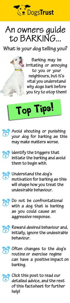Although  barking  may  be  irritating  or  annoying  to  you  or  your  neighbours  it's vital you understand why dogs bark before you try to stop them!