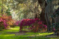 iris garden images | Mystical Garden is a photograph by Iris Greenwell which was uploaded ...