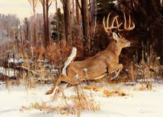 """Dense Cover"" Ken Carlson The Coeur d'Alene Art Auction Wildlife Paintings, Wildlife Art, Deer Paintings, Whitetail Deer Pictures, Deer Pics, Hunting Art, Hunting Stuff, Deer Hunting, Deer Wallpaper"