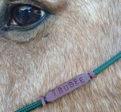 Personalizable Rope Halters by knottedrope on Etsy