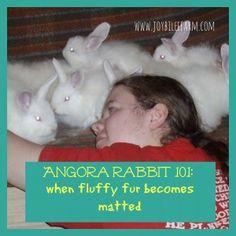 Angora Rabbit 101: how to deal with matted fur~JoybileeFarm