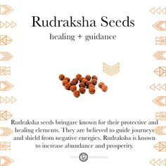 Rudraksha Seeds | Gemstones & Sacred Materials | Tiny Devotions | Mala Beads | Intention | Setting | Yoga | Yogi | Sacred Tusk