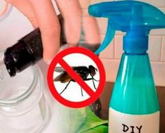 6 receitas de repelentes naturais para moscas