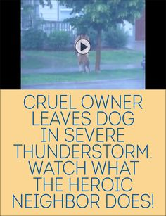 Cruel Owner Leaves Dog In Severe Thunderstorm. Watch What The Heroic Neighbor Does!