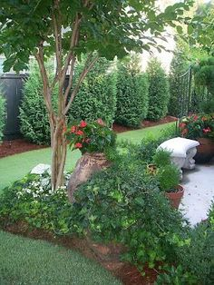 Beautiful landscaping - Leland cypresses along the fence, Natchez white crepe myrtle, concrete rounded benches from Lowes, patio surrounded by boxwoods, and herb garden filled with rosemary, thyme, and basil.