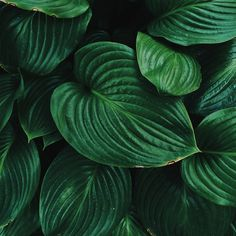 green, plants, and nature image Tropical Background, Leaf Background, Textured Background, Leave In, Green Leaves, Plant Leaves, Green Grass, Belle Plante, Deco Nature