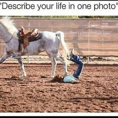 Getting thrown off and trampled by horse describes it pretty accurately Funny Horse Videos, Funny Horse Memes, Funny Horse Pictures, Funny Horses, Funny Animal Memes, Funny Animals, Horse Riding Quotes, Horse Quotes, Animal Quotes