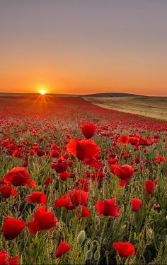 Poppies and Coreopsis Wallpaper Flowers Nature Wallpapers) – Funny Pictures Crazy Beautiful Nature Wallpaper, Beautiful Landscapes, Beautiful World, Beautiful Gardens, Beautiful Sunset, Landscape Photography, Nature Photography, Free Photography, Photography Backdrops