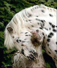 Horses-dalmatas :D