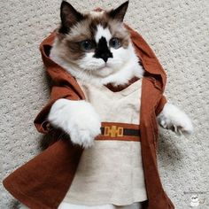 Albert loves to pay homage to his favorite movies, such as Star Wars� | Albert Is The Cutest Munchkin Cat You Will Ever See