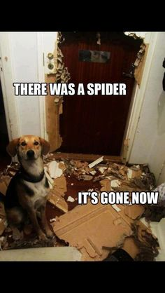 I'm glad my puppy's habit of chewing walls was never this bad!
