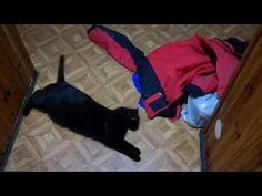 Kot zakochał się w kurtce...