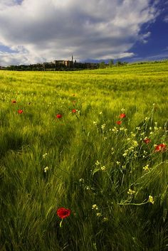 Tuscan landscape (photo by Piotr Siejka)....