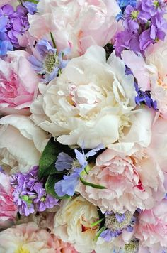 Beautiful Peonies +