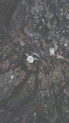 Nature. Rustic themed engagement ring picture.