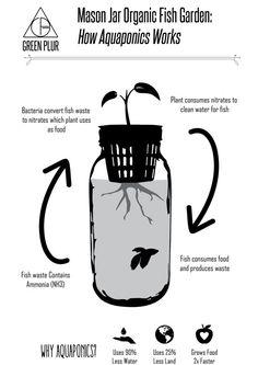Mason Jar Organic Fish Garden Desktop Aquaponics and by GreenPLUR