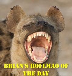 """Brian's ROFLMAO of the Day:    A guy is strolling along Vegas Strip when a stunning hooker catches his eye. He strikes up a conversation and eventually asks, """"How much?""""    The Hooker replies, """"$500 for a hand-job."""" The guy's jaw drops: """"$500 dollars, For a hand-job! No hand-job is worth that kind of money!""""    The hooker says, """"Do you see that Hard Rock cafe on the corner?""""    """"Yes.""""    """"Do you see the Hard Rock about a block further down?""""    """"Yes.""""    """"And beyond that, do you see that…"""