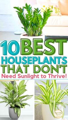 Garden Yard Ideas, Lawn And Garden, Garden Projects, Best Indoor Plants, Outdoor Plants, Indoor Planters, Indoor Gardening, Garden Plants, Patio Plants