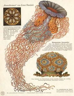 one of my favorites of all time, the scientific Illustrator Ernst Haeckel.