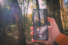Free Photography, Phone Photography, Nature Photography, Voss Bottle, Water Bottle, Free Phones, Win Free Gifts, Tree Forest, Fall Leaves