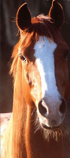 How to Tell If Your Horse is Happy