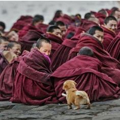 Photo by Tag someone you'd love to visit Tibet with! Animals And Pets, Baby Animals, Funny Animals, Cute Animals, Nature Animals, Wild Animals, Tier Fotos, Jolie Photo, People Of The World