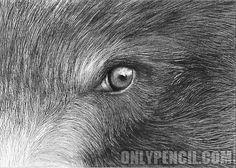 Resultado de imagen para bear eyes drawing