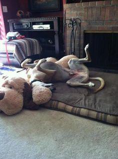 Home - Greyhound Adoption Center Adoption Center, Greyhounds