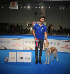 Mirra Bruna di Fossombrone JUNIOR EUROPEAN WINNER 2018 & BEST OF BREED E.D.S. Varsavia 2018!!!! 🏆🐺✌🏼️🇵🇱 Dog Show, Wrestling, Dogs, Sports, Lucha Libre, Hs Sports, Doggies, Sport, Dog