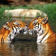 #animals #animal #dog #cat #TagsUpLikes #dogs #cats #animales #cute #love #nature #حیوانات #حیوان #اهلی #وحشی