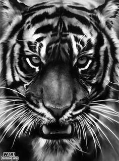 #Tiger Charcoal Art WIN