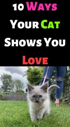 10 Ways Your Cat Shows You Love – #cutecat #instacats #cutecats #petstagram #kittensofinstagram #catloversclub #petsofinstagram #dog #ilovecats #catslife #features #catsoftheday #kittycat #catsoftheworld #instagood #photooftheday #katze #catsofig #caturday #catsofinsta #catsofworld #instagramcats #katzen #gatto #chat #gatosdeinstagram #catslover #photography #nature #blackcat – ANIMALS LOVELY I Love Cats, Cute Cats, Funny Cats, Cat Crying, Funny Cat Videos, Cat Gif, Beautiful Cats, Persian, Cat Lovers
