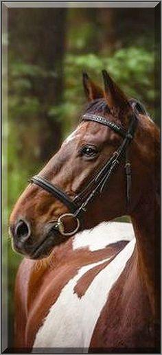 Looking beautiful horse #Fotograf: katrinfirlus