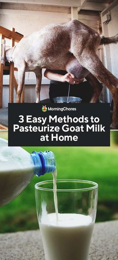 3 Easy Methods to Pasteurize Goat Milk at Home <br> Goat milk has such a wide range of uses, but before you use it you may want to know how to pasteurize goat's milk, as well as a few reasons not to. Pinterest Foto, Goat Milk Recipes, Goat Shelter, Goat Barn, Nigerian Dwarf Goats, Raising Goats, Raw Milk, Goat Farming, Baby Goats