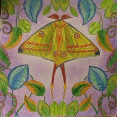 Image Result For Tropical Wonderland Coloring Book