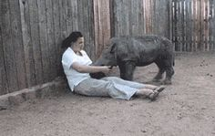 Baby Rhino Just Wants To Cuddle... Why don't I have this job?