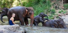 rescuing elephants at an eco lodge Thailand