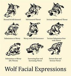 Wolf Facial ...